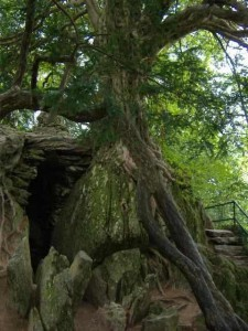 The Witches Kitchen, in the rock gardens, at Blarney Castle