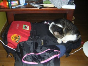 Tomo, asleep on my backpack
