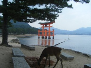 This red torii (gate) at the Itsukushima Shrine (Miyajima) welcomes visitors to the island - famous throughout Japan and the rest of the world. Deer all over the place...